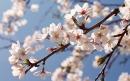 Поздравление председателя Федерации профсоюзных организаций Саратовской области с праздником Весны и Труда и Днем Победы